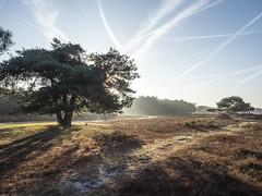Bussumerheide 2018: Throwing shadows (mdiepraam) Tags: bussumerheide 2018 bussum westerheide heath earlymorning dawn sunrise tree branch backlight