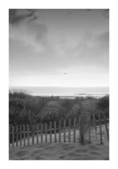 Seagul flying in the beach... (bafdias) Tags: monochrome beach sea seagul sonya850 minolta2870mmf28