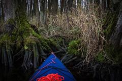 _MG_9913.jpg (qitsuk) Tags: moss peene root mecklenburgvorpommern germany foldingkayak klepper altplestlin shore