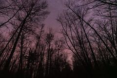 Winter Nightscape - St. Croix State Park, Minnesota (Tony Webster) Tags: december minnesota saintcroixstatepark stcroixstatepark astrophotography longexposure night nightsky nightscape sky stars trees winter
