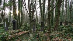 Jewish Cemetery in Łódź (Arkadious) Tags: jewish jew jews cemetery history lodz łódź łódzkie poland polen cmentarz autumn green nature forest tree trees woods tomb tombstone tombstones old