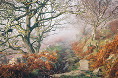 Fairytale Path (J C Mills Photography) Tags: peakdistrict derbyshire mist fog trees autumn bracken path