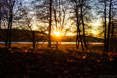 Sunset silhouettes (Joni Mansikka) Tags: autumn nature outdoor sunset landscape leaves light trees branches silhouettes sauvo suomi finland