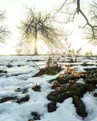 Befora Sunset (BenedekM) Tags: sunset sun normafa budapest city woods trees leaves lights white snow nature nikon d3200 travel