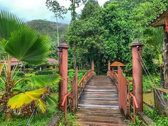 Welcome to the jungel 🌴🐜🐍🐒  Krabi Thailand (goranssonmagda) Tags: nature naturelover naturelovers landscape landscapelover landscapes landscaplovers dof rural rurallove tree trees treelover treelovers wood woods woodland country countryside winter wintertime phuket krabi thailand