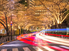 Under the Cherry Blossoms (IRRphotography) Tags: japan tokyo trees road night cherry blossom street longexposure trails lights travel citi urban