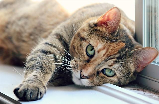 Гуманизм в действии: в Сызрани активисты стерилизуют кошек и собак, чтобы сохранить им жизнь