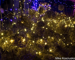 915A6311 (mikekos333) Tags: 2018 december christmas christmaslights coastalmainebotanicalgardens boothbay