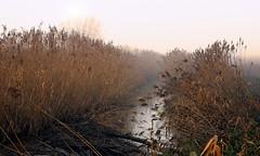 Durme - Waasmunster - Belgium (roland_tempels) Tags: supershot nature durme waasmunster water belgium