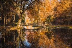 Autumn Colours (hjuengst) Tags: autumn fall fallcolors autumncolours orange tree bäume reflection reflektionen zinneberg bavaria bayern lake see westerndorf glonn