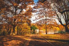 Fantastic park ... (Julie Greg) Tags: park way autumn autumn2018 colours canon tree trees leaf leafs lake kent england grass motepark