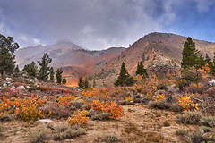 Autumn color palette (AgarwalArun) Tags: sony a7m2 sonyilce7m2 landscape scenic nature views easternsierra bishopca bishopcreek lakes leaves autumn fallfoliage mountains inyonationalforest northlake