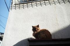 T43Lomo001 (m_m1941) Tags: c41 tokyo t43lomo cat gato felino nuko