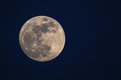 🌕  Moon ♥ (Torok_Bea) Tags: moon moonshot fullmoon wonderful beautiful hold telihold nikon nikond7200 natur nature tamron tamron150600 night bluehour