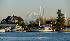 View of Mt. Baker in Washington - Canoe Pass (SonjaPetersonPh♡tography) Tags: delta ladner bc britishcolumbia canada nikon nikond5300 mtbaker view mountain landscape mountainlandscape riverfront river waterfront waterscape water mount baker mountainpeak scenic scenery home boats sailboats juandefucastrait mountbaker