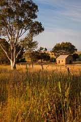 Tungkillo, Murraylands - South Australia (Trace Connolly Photography) Tags: australia natur natura natural nature naturaleza naturephotography colour color colourful outdoor outdoors outside eos canon sunlight exposure flickr landscape earth environment environmental environmentalphotography sunset sunrise contrast red green yellow blue black white scene scenery cloud clouds sky scenic weather holiday view country countryside orange purple pink building architecture stone brick fields grass tree trees foliage southaustralia tungkillo murraylands