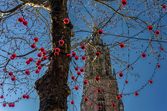 appletree (opdrie) Tags: city red blue tower trees christmas church sky apple decoration netherlands amersfoort langejan