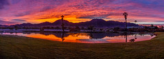 Beautiful Panoramic Sunrise (http://fineartamerica.com/profiles/robert-bales.ht) Tags: arizona foothills forupload freshwater haybales people photo places projects states sunsetorsunrise sunset sunrise golden red lake pond yuma palmtree weeds reflection silhouette spectacular awesome magnificent peaceful serene surreal sublime spiritual inspiring inspirational evening relaxing unitedstates panoramic southwest trees twilight wow dramatic emotion environment desert sunrays sky yellow nature outdoor water colorful sun dawn horizontal tranquil exotic orange mountain robertbales gilamountains