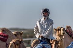 Camel ride (aliffc3) Tags: camel ride racing travel tourism nikond750 nikon80200f28 qatar