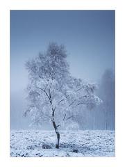 Petrified (Dave Fieldhouse Photography) Tags: trees tree frozen winter snow ice fog mist mistytreeshots derbyshire derbyshirelife hathersage moorland monochrome portrait fuji fujifilm fujixt2 wwwdavefieldhousephotographycom peakdistrict peaks weather
