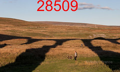 robfrance5d2_28509_280918_ribblehead_viaduct_inf_edr16lr6pse15coefx4weblowres (RF_1) Tags: 2018 britain british dales england rail railroad rails railway railwayviaduct railways ribblehead ribbleheadviaduct rural sc settlecarlisle shadow shadows transport uk unitedkingdom viaduct yorkshire