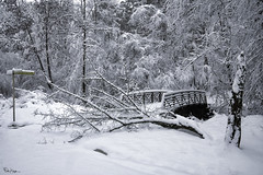 Obstacles don't block the path, they are the path ~ Zen Proverb (Karnevil) Tags: usa us unitedstatesofamerica unitedstates northamerica america northcarolina nc raleigh northraleigh shelleylake bentcreek lake bridge greenway greenwaytrails capitalareagreenwaytrailsystem trail winter icestorm cold freezing snow ice frozen icicle snowflakes creek tree fallentree blocked path midrangelens sony alpha sonyalpha a7riii a7 riii petekreps