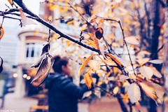 There is somehting (gusdiaz) Tags: autumn fall otoño arboles hojas city urban bokeh fuji fujifilm xt2 16mm beautiful trees leaves leaf woman wife love blur depthofield season seasons estaciones frio cold charlotte nc park streets vsco vscocam