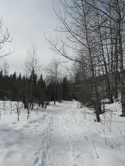 Cross Country Hiking (Mr. Happy Face - Peace :)) Tags: htmt trees forest snow sun cloud sky trail skiing outdoors activity winter nature hiking art2019