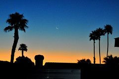 moon (greenelent) Tags: sunrise skyvalley ca california sun palmtrees palmsprings 365 photoaday