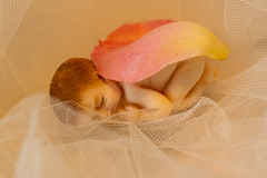 """One Single Petal"" (daveknight1946) Tags: smileonsaturday onesinglepetal petal doll mouldedpastedoll pink yellow handmadedoll"