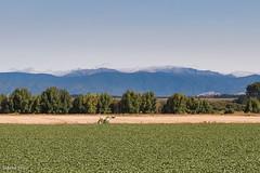 190128 094953 (Vibeke Friis) Tags: martinborough wellingtonregion newzealand nz