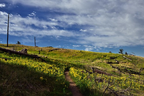 Yellow Flowers and Clouds in Devils Tower National Monument