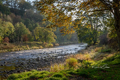 SJ1_2691 - River Wharfe (SWJuk) Tags: swjuk uk unitedkingdom gb britain england yorkshire northyorkshire wharfedale river riverwharfe prioryruins boltonabbey scenery landscape waterscape countryside flowing ripples grasses light sunlight shadows trees foliage leaves 2018 oct2018 autumn autumnal autumncolours nikon d7200 nikond7200 nikkor1755mmf28 rawnef lightroomclassiccc