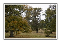 Autumn Trees (Audrey A Jackson) Tags: canon60d dorset cerneabbas woodland trees autumn colour