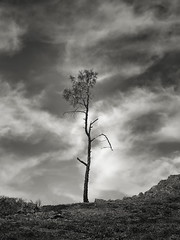 Tree along Condor Gulch Trail (StefanB) Tags: usa 1235mm 2018 california em5 geotag hiking outdoor pinnacles tree treescape nationalpark condorgulch
