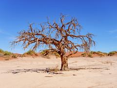 P1107741-LR (carlo) Tags: namibia panasonic dmcg9 g9 africa desert deserto landscape africanlandscape sossusvlei