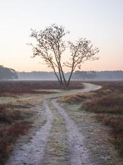 Bussumerheide 2018: S-curve (mdiepraam) Tags: bussumerheide 2018 bussum westerheide heath earlymorning dawn sunrise tree branch heather path