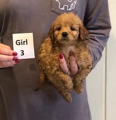 Kizzie Girl 3 pic 2 12-9