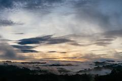 (CMGS1988) Tags: batangduri daerahtemburong 文莱达鲁萨兰国 bn