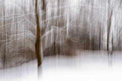 Snow Ghosts (Macro Lord) Tags: icm snow winter tree trees blur blurry movement impression