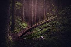 RCFPP_1_2018 (GeologistAngler) Tags: bosco vecchio campo geologia maggio vajont escursione woods woodlands landcapes landscape photography nature dark mood fotografia naturalistica paesaggistica foresta
