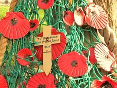 Remembrance (bikerchick2009) Tags: rememberance rememberancememorialnewbrightonwirral poppy war wirral england park britain second world merseyside newbrighton