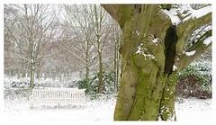 White bench (leo.roos) Tags: bench bank beech beuk snow sneeuw thehague denhaag loosduinen ockenburg ockenburgh landgoed estate countryestate park a7rii cz sony242 amount sonycarlzeiss24mmf2zassmdistagon sal24f20z darosa leoroos distagon2420za distagont224