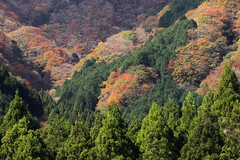 The autumn leaves, there, are extremely beautiful. (ULTRA Tama) Tags: theautumnleaves there areextremelybeautiful japan shizuoka fuji todays dayliphoto instadaily photogenic igjapan loversnippon worldcaptures flickrfriday welovef september 2018 worldheritage tabijyo genicmag retripjapan retripshizuoka explorejapan traveljapan radiof artofimages ftimes genictravel geniclife genicblue genicjapan genicphoto genictown genicsummer tabijyosummer tabijyomaptwn tabijyotravel uti