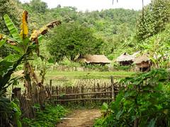 Long necked women Chang Mai Village (Maurizio Esitini) Tags: thailand chang mai long neck head woman kayan tribe village green tree