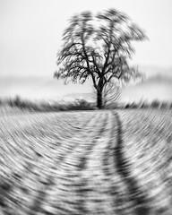 The shaking Tree... (Ody on the mount) Tags: abstrakt anlässe bäume em5 experimente felder fototour mzuiko40150 omd olympus pflanzen schwäbischealb abstract bw monochrome sw tree