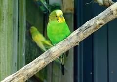 Washington Park Zoo (Tiger_Jack) Tags: washingtonparkzoo indiana zoo zoos zoosofnorthamerica bird birds