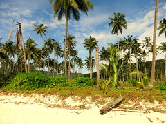 IMG_3256 (craigharrisnelson) Tags: koh kut kood island trat thailand ao phrao beach palm trees coconuts