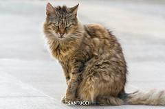 _SAM3114 (Eric Santucci) Tags: cat samsung nx20 50200 fluffy coat feline