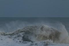 IMG_0678 (monika.carrie) Tags: monikacarrie wildlife scotland aberdeen waves